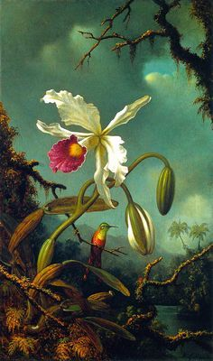 Martin Johnson Heade White Brazilian Orchid painting for sale, this painting is available as handmade reproduction. Shop for Martin Johnson Heade White Brazilian Orchid painting and frame at a discount of off. Botanical Drawings, Botanical Prints, Art Floral, Martin Johnson Heade, Impressions Botaniques, Illustration Botanique, Hudson River School, Oil Painting Reproductions, Oeuvre D'art