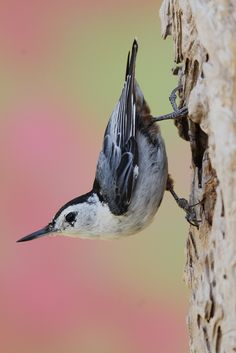 クリス·ザ·Photog:美しい鳥