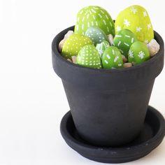 Cactus Stones