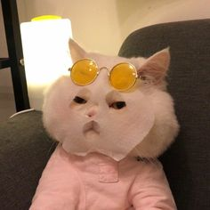 Funny Cute Cats, Cute Baby Cats, Cute Little Animals, Cute Funny Animals, Cool Cats, Kittens Cutest, Baby Farm Animals, Cute Animal Photos, Funny Animal Pictures