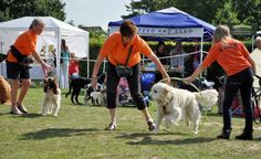 Fairhaven Woodland and Water Garden at South Walsham, is staging its fifth annual Dog Day on Sunday, August 31, from 10am to 3.30pm.