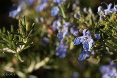 O alecrim que enfeita os nossos jardins! 🌺  #flower #garden #tourism #hotel #alentejo #wildlife #nature #green #purple
