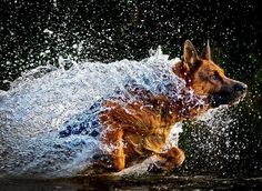 pictures of animals running through water | in Animal Pictures