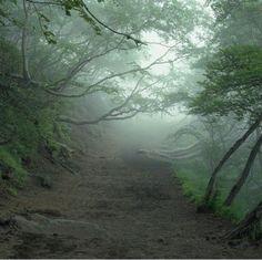 Suicide Forest, Japan Fb page Spooky Places