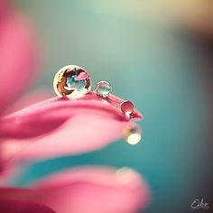 Another great macro shot. The focus in this picture is incredible as well. The reflection is clear and interesting.