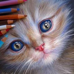 Animal pencil drawings: Kate Mur is an Russian artist who specializes in color pencil drawings. Her pencil drawings are so real, it makes you wonder if they are photographs or drawings. Colored Pencil Artwork, Color Pencil Art, Sweet Drawings, Colorful Drawings, Cat Drawing, Painting & Drawing, Black Paper Drawing, Pencil Drawings Of Animals, Texture Art