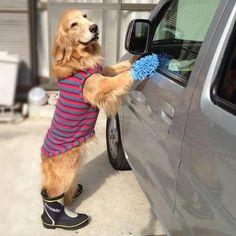 workin' at the car wash...