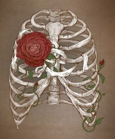 art, bones, flowers, ribs, rose