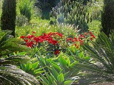 super! Mashamba Garden Design   Therapy- subtropical