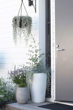 Harmaatakin harmaampi sisäänkäynti If I had to pick one place that I wanted to make beautiful in my yard, it would definitely be the entrance. Balcony Garden, Garden Pots, Planter Garden, Herb Garden, Pot Jardin, Outdoor Living, Outdoor Decor, House Front, Flower Beds
