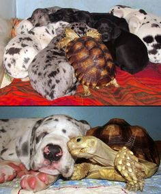 Love is not bound to species…LOVE this! (thanks @Karen Jacot Jacot Darling Space  Stuff Blog Garong)