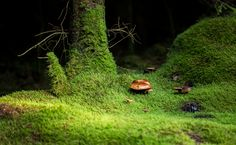Mushrooms by Clive Orange on 500px