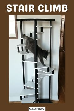One of our tallest Cat Tree Towers. Designed for very active and energetic cats. A Cat Ladder is a great way for your pet to stay healthy and fit as climbing is one of the best exercises for cats. The best Cat Furniture idea is the one that holds your pets interest, and that's the object of the MillyFitcat Spiral Cat Tree. Allow your kitty to rise above. Click or Claw over to our Etsy shop for full description and available sizes. Meow! #cattreemodern #cattree #catladder #cattower Cat Climber, Cat Stairs, Cat Exercise, Modern Cat Furniture, Tree Plan, Furniture Market, Cat Tree, Cool Cats, Pet Toys