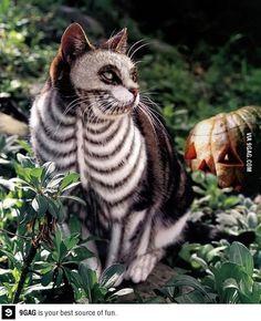 Tim burton kitty