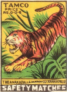 Beautiful tiger running through the jungle on a box of matches from Annakapalle, Andhra Pradesh, India.