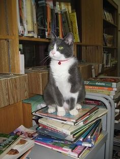 Many libraries have resident cats that become quite the local characters.  9 Delightful Library Cats | Mental Floss