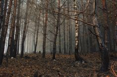 Child Of The Ancient Forest - Autumn forest (Czech Republic) by   David Charouz...