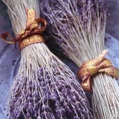 Lavendel /// Lavendar for Lent - place on tables with candles, stones and burlap.  Stimulates scent, touch, and visual