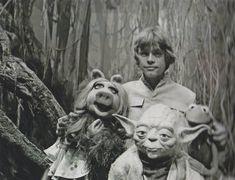 Luke Skywalker & Yoda get visited by Miss Piggy and Kermit. Behind-the-scenes of Star Wars: Episode V - The Empire Strikes Back Star Wars I, Star Wars Cast, Mark Hamill, Jim Henson, Luke Skywalker, Star Wars Brasil, Estilo Geek, Images Star Wars, Fraggle Rock