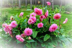 by Heikki Rantala Gardening, Plants, Fun, Lawn And Garden, Plant, Planets, Horticulture, Hilarious