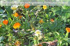 Aussaatplaene im Februar, Gemüsebeet mit Gründünger Premium Wordpress Themes, Planer, Gardening, Inspiration, Mushrooms, Winter Vegetable Gardening, Allotment, Farmhouse Garden