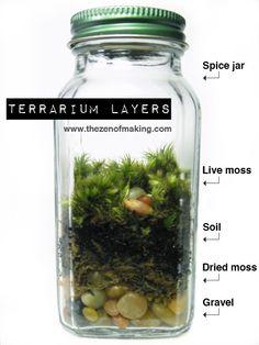Terrários- micro jardins
