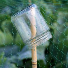 To hold up protective netting,,,small jar is great idea to prevent stake from going through. Great idea for Tommy's veggie garden! Fruit Garden, Edible Garden, Vegetable Garden, Garden Plants, Fruit Plants, Organic Gardening, Gardening Tips, Plantation, Farm Gardens