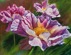 Pink Peonies in Watercolor - Step by Step Demo by artist Lisa Hill    5.  When the masking fluid is removed and the white paper is revealed, very stark edges appear the white paper and the paint that has been applied.   Using a stiff brush and water, the harsh edges are softened and blurred to develop curved forms and subtle ridges and ruffles.   This technique works well for paintings where the subject is in very bright light with highly contrasting lights and darks.