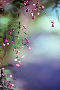 ƸӜƷ sweet forest berries
