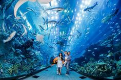 Dubai Aquarium & Underwater Zoo - Featured on RueBaRue. Dubai Mall is home to a magnificent world-class aquarium—a great deal of which can be viewed free of charge—and the aquatic zoo above. There are some sea creatures in the aquarium, including In Dubai, Dubai Mall, Visit Dubai, Dubai Hotel, Dubai City, Armani Hotel, E Ticket, Tour Tickets, Flight Tickets
