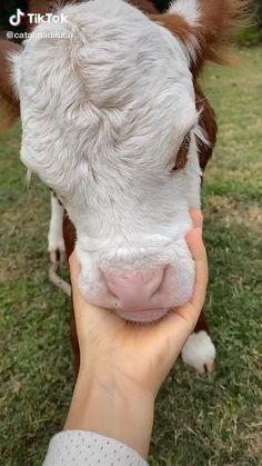 Cute Wild Animals, Cute Little Animals, Cute Funny Animals, Animals Beautiful, Animals And Pets, Farm Animals, Cute Baby Cow, Baby Cows, Cute Cows