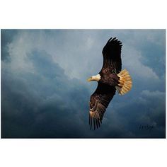 Trademark Fine Art Eagle in the Sky Canvas Art by Lois Bryan, Size: 22 x 32, Multicolor