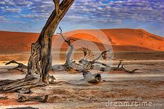 Photo about Dead tree in Dead Vlei - Sossusvlei, Namib Desert, Namibia. Image of desolate, parch, arid - 25559729 Namib Desert, Royalty, Painting, Image, Art, Royals, Art Background, Painting Art, Kunst