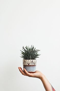 Creating your own planters from well loved, but worn out items or from found treasures is a great way to make a personal statement about your garden Cacti And Succulents, Potted Plants, Indoor Plants, Succulent Pots, Cactus Planta, Cactus Y Suculentas, Pot Jardin, Deco Nature, Plants Are Friends