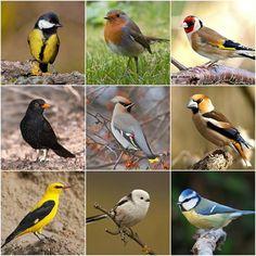 Pretty Birds, Beautiful Birds, Feeding Birds In Winter, Cement Art, Bird Tree, Forest Animals, Bird Species, Wild Birds, Earth Day