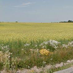 Jaska-Aimla, Viljandi County, Estonia