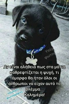 Animals And Pets, Cute Animals, Beautiful Pink Roses, Greek Quotes, Good Morning Quotes, Inspire Me, My Best Friend, Love Quotes, Messages