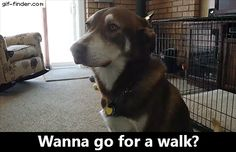 Wanna go for a walk?