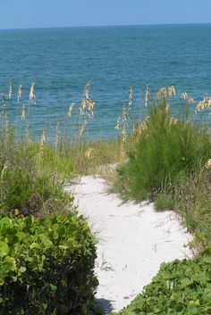 Captiva Island, FL I took this picture during our trip in 2011, absolutely recommeded.