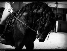 The Marismeño is a rare breed of horse indigenous to the marshes of the Guadalquivir River, from which it takes its name. It is now found particularly in the Doñana National Park, which lies mostly in the province of Huelva, in Andalusia, southwestern Spain. Until recently it was not considered a breed; recognition and recovery began in 2003. It is listed in the Catálogo Oficial de Razas de Ganado de España in the group of autochthonous breeds in danger of extinction.