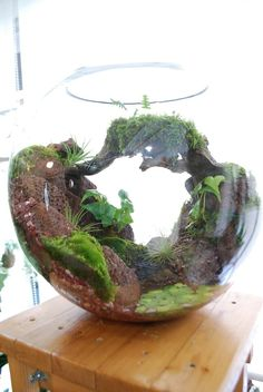If you were looking for moss garden, take a look below