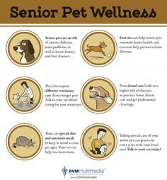 Our senior pets deserve all the love we could give them, and here are some tips to ensure their wellness.