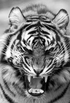 ...be beautifully fierce