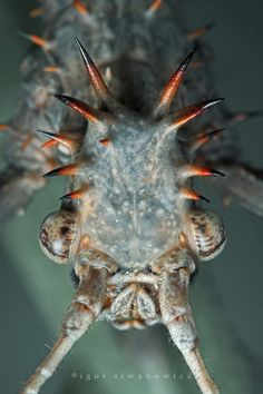 Amazing Alien Insects Up Close | Cool Things | Pictures | Videos