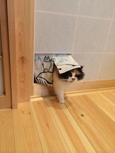 【画像】 閉めてると障子を破るのでいっそ暖簾にしてみた結果→ http://nekomemo.com/archives/44198705.html …   〓 ねこメモ 〓