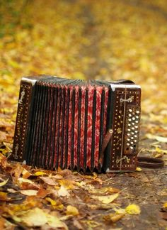 accordion...one day I will learn to play, and I will dance and sing all night long girl band- French - canaan days