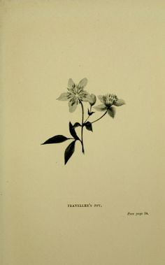 Types of British plants. - Biodiversity Heritage Library