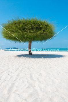 Single tree portrait on a beach in Malaysia