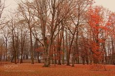 In the park by DanRaizPhoto #nature #mothernature #travel #traveling #vacation #visiting #trip #holiday #tourism #tourist #photooftheday #amazing #picoftheday
