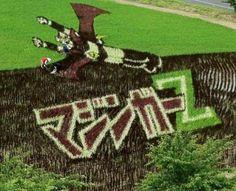 Arte en el arrozal japones